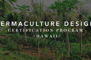 Video About Our Permaculture Certification Course
