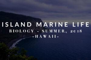 Marine Life on the Islands!