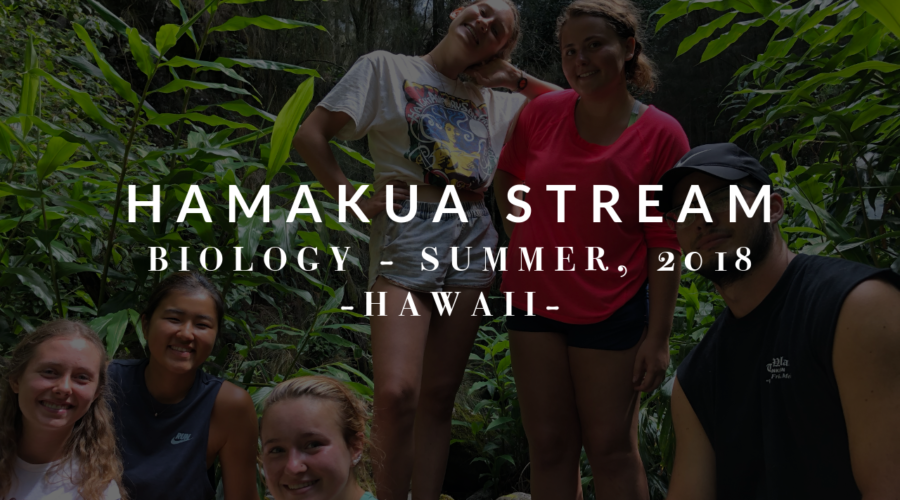 Hamakua Stream