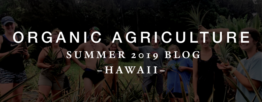 Organic Agriculture – Summer 2019 Blog