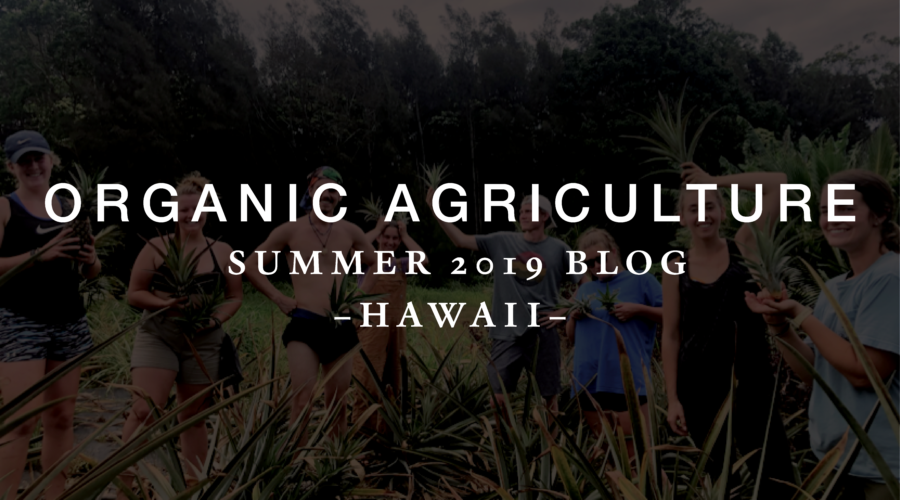 Organic Agriculture – Summer 2019 Blog