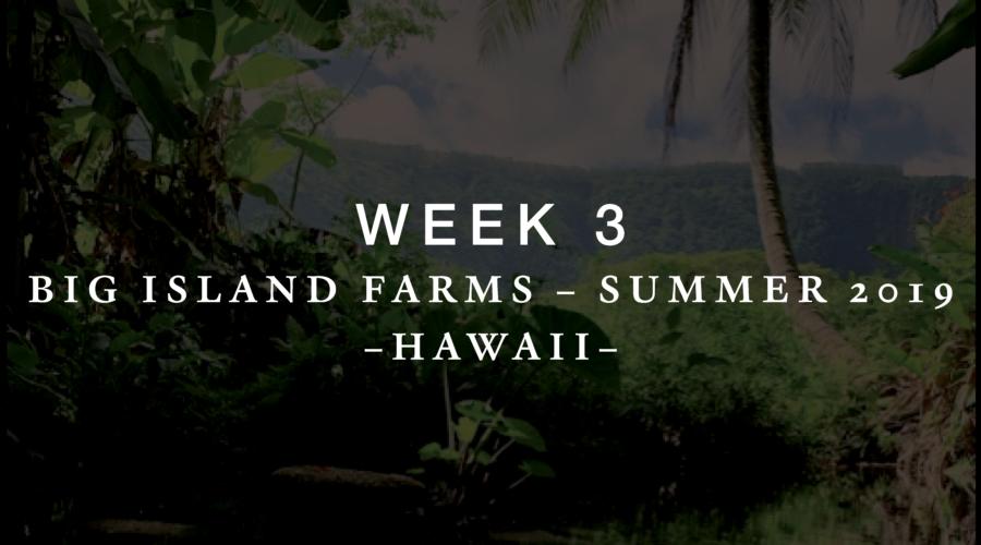 Week 3 Blog