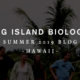 Big Island Biology Blog 2019