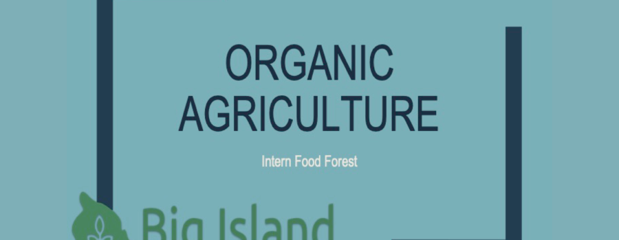 Organic Agriculture – Intern Food Forest
